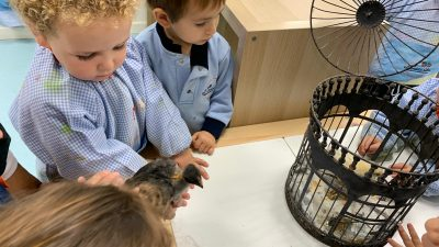 Protegido: Aula de Marián: Nos visitan los pollitos de Marisa