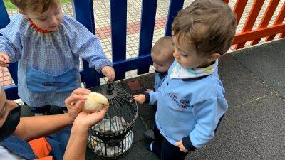 Protegido: Aula de Marisa: Nos Gustan los pollitos de Marisa